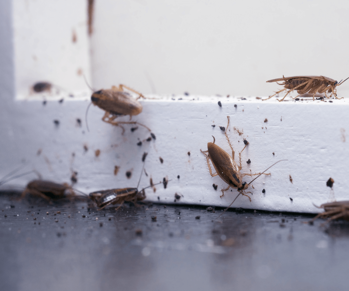 , Types of Bugs, Patriot Pest Services
